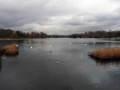 The Serpentine See