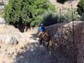 Auf dem Eselweg nach unten